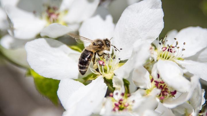 Новосибирцев стали чаще жалить осы: врач рассказала, что делать при укусах разъярённых насекомых