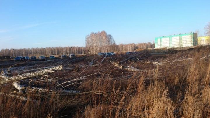 В «Парковом» вырубили рощу для строительства высотки