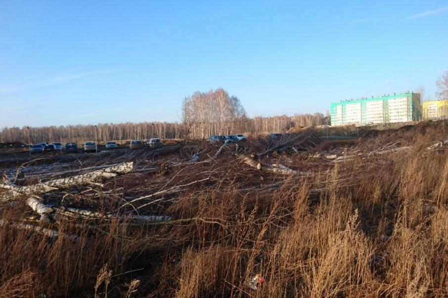 Вместо вырубленных деревьев застройщик заплатит за новое озеленение