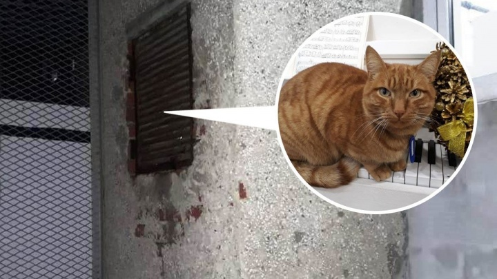 На ВИЗе спасли рыжего кота, который залез в шахту и не смог найти выход