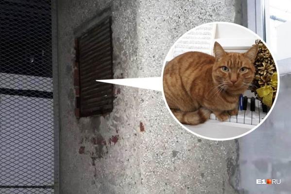 Котик в поисках выхода уперся в вентиляционную решетку