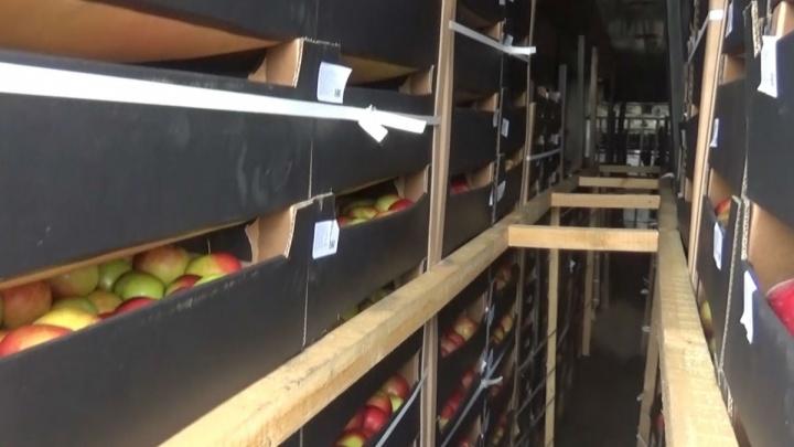 «Водители живут в фурах, яблоки гниют»: на таможне в Челябинской области застряли 11 грузовиков