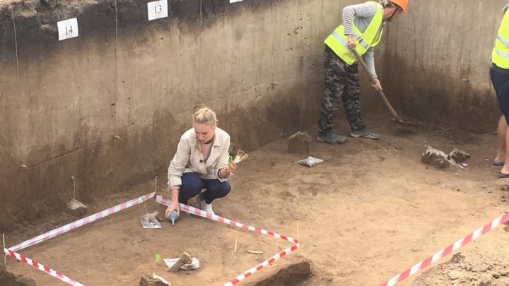 Череп пещерного льва обнаружили археологи в районе Солонцов