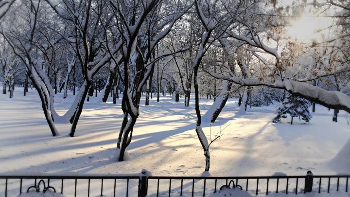 Оттепель и снова морозы: синоптики дали прогноз на первую половину недели