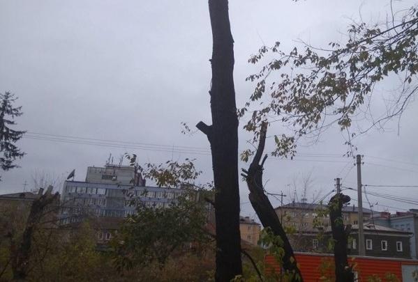 В Красноярске решено создать спецгруппу для борьбы с варварской обрезкой деревьев