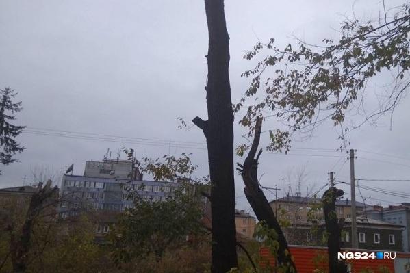 Так прошла подрезка деревьев в центре Красноярска прошлой весной