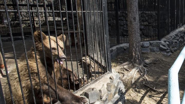 Зоопарк заказал новые вольеры для медведей —с водопадом, рекой и потайными уголками