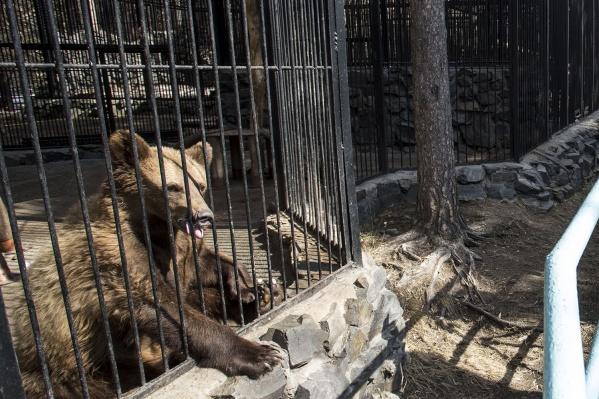Вольер бурого медведя
