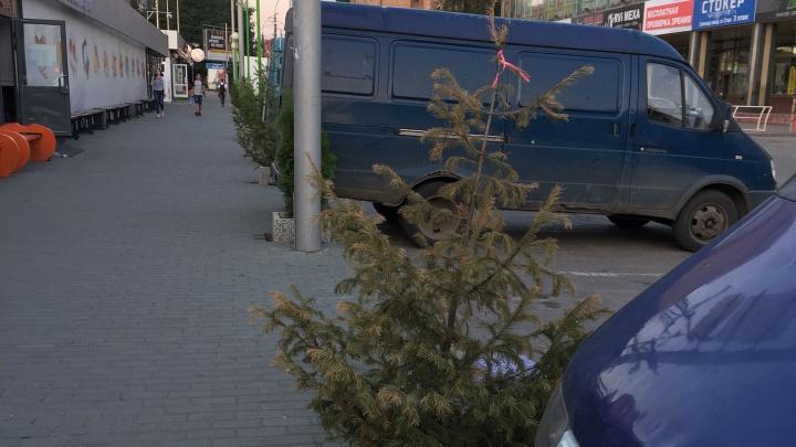 На аллеях у Центрального рынка пожелтели молодые деревья за 200 тысяч