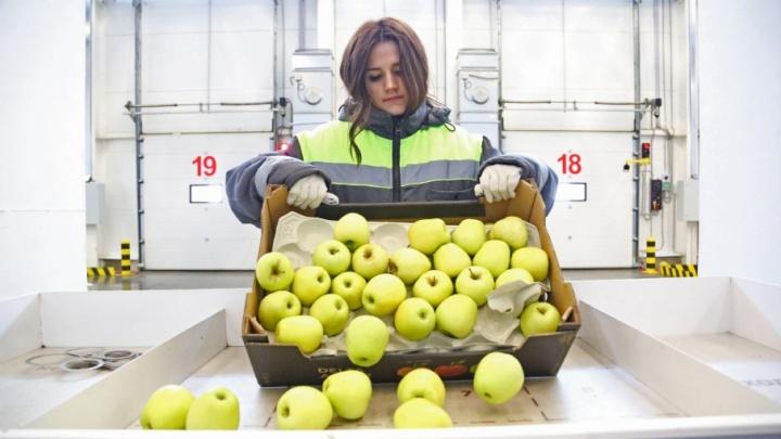 В Уфе открыли современный распределительный центр торговой сети «Пятёрочка»