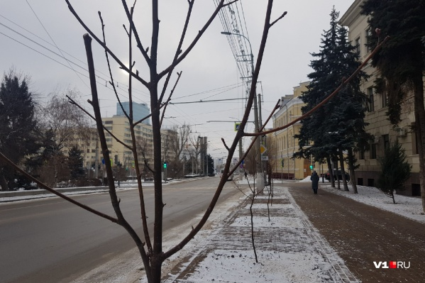 Вот так блекло теперь выглядит тротуар перед зданием областной администрации