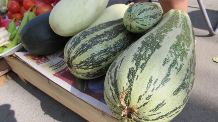 В Кургане с 14 сентября начнет работать сельскохозяйственная ярмарка «Дары осени»