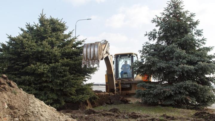 «Год за ними будут присматривать»: елочки с центральной набережной прописались у двух ЖК Волгограда