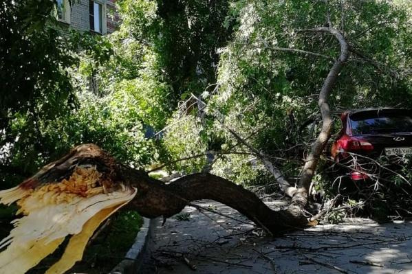 Дерево повредило только автомобиль