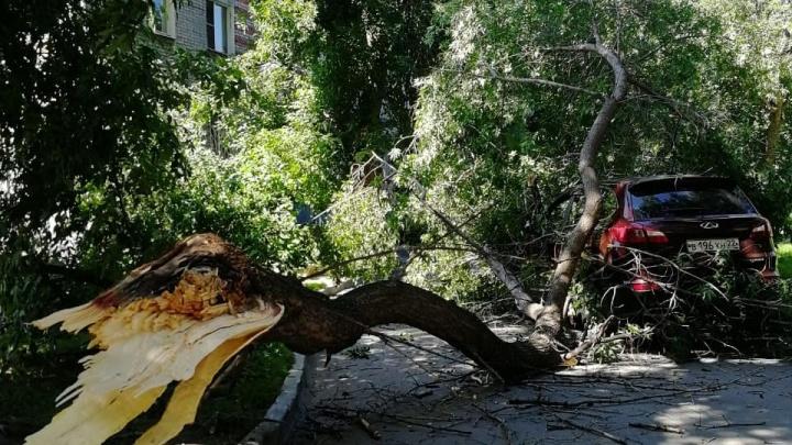 Огромный сук помял машину работника управляющей компании на улице Танковой