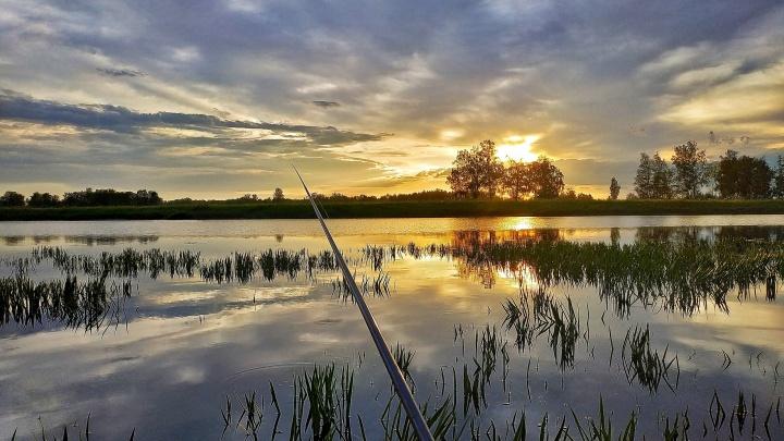 Сегодня будет клёво: тест ко Дню рыбака
