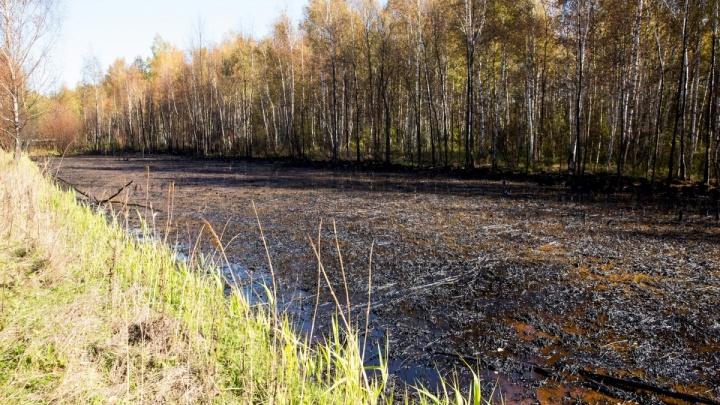 Прокуратура выяснила, откуда в Ярославле появилось нефтяного озеро
