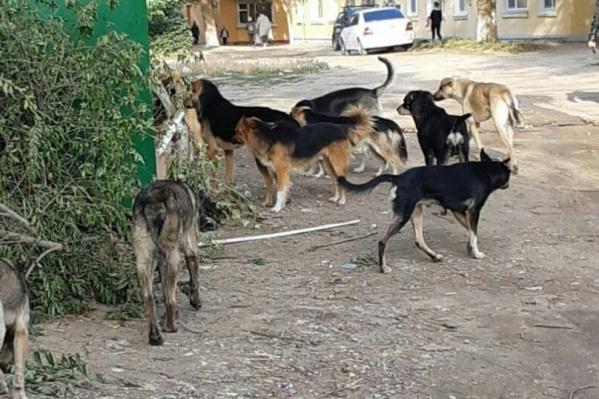 Отлов бездомных животных в регионе практически не проводится