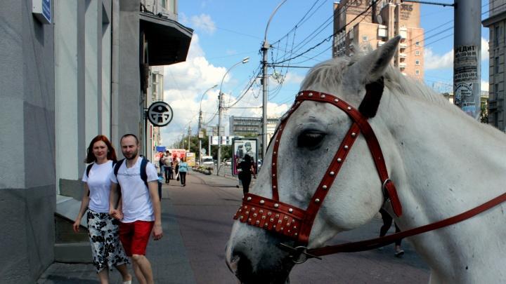 Ну и село! 10 фото центра Новосибирска, где он очень похож на деревню