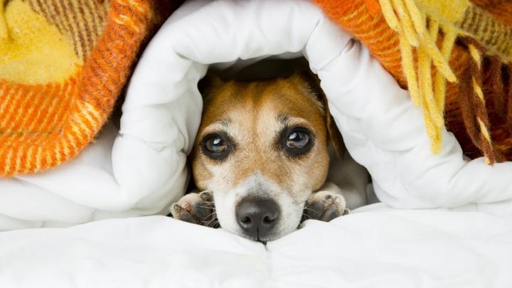 Дома холод собачий: 2 причины, из-за которых все тепло уходит на улицу