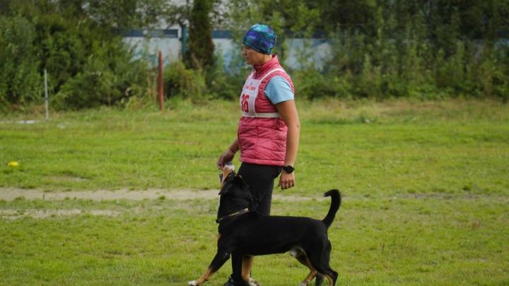 Кто самый хороший мальчик? В Уфе пройдут соревнования по послушанию собак — обидиенс