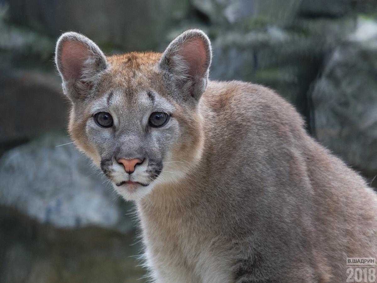 София родилась в зоопарке в конце ноября 2017 года у самки Миланы и самца Гудзона