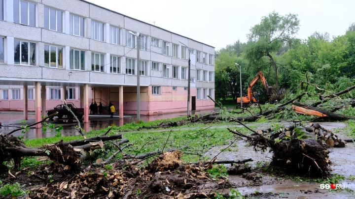 В соцсетях пишут, что на случай ураганов у школ Перми стали вырубать деревья. Это так?