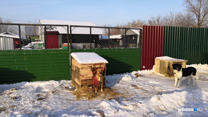 У отловленных бродячих собак в омском «Спецавтохозяйстве» осталось корма на три дня