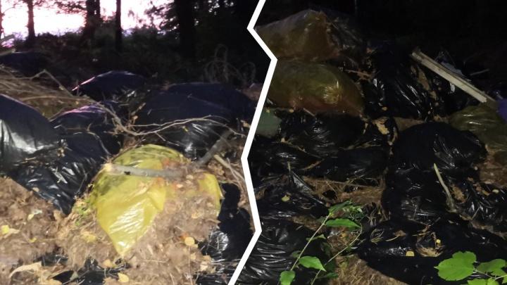 «Слов не хватает»: в дубовой роще под Ярославлем нашли большую вонючую свалку