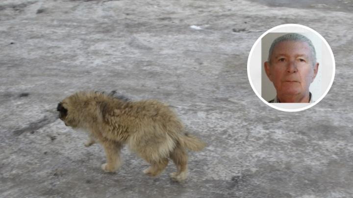 Собака дачника нашла в Тюмени тело пропавшего пенсионера