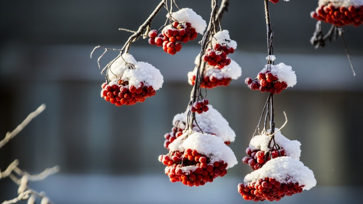 Пошла жара: в Новосибирск идёт сильное потепление