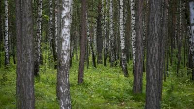 «Пинать поганки и искать мох»: правила выживания в лесу для тех, кто потерялся