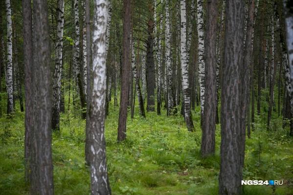 Потеряться в лесу можно за считаные секунды, даже если вы много раз были в этом месте