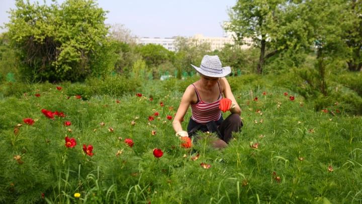 В Самаре увеличили время работы Ботанического сада