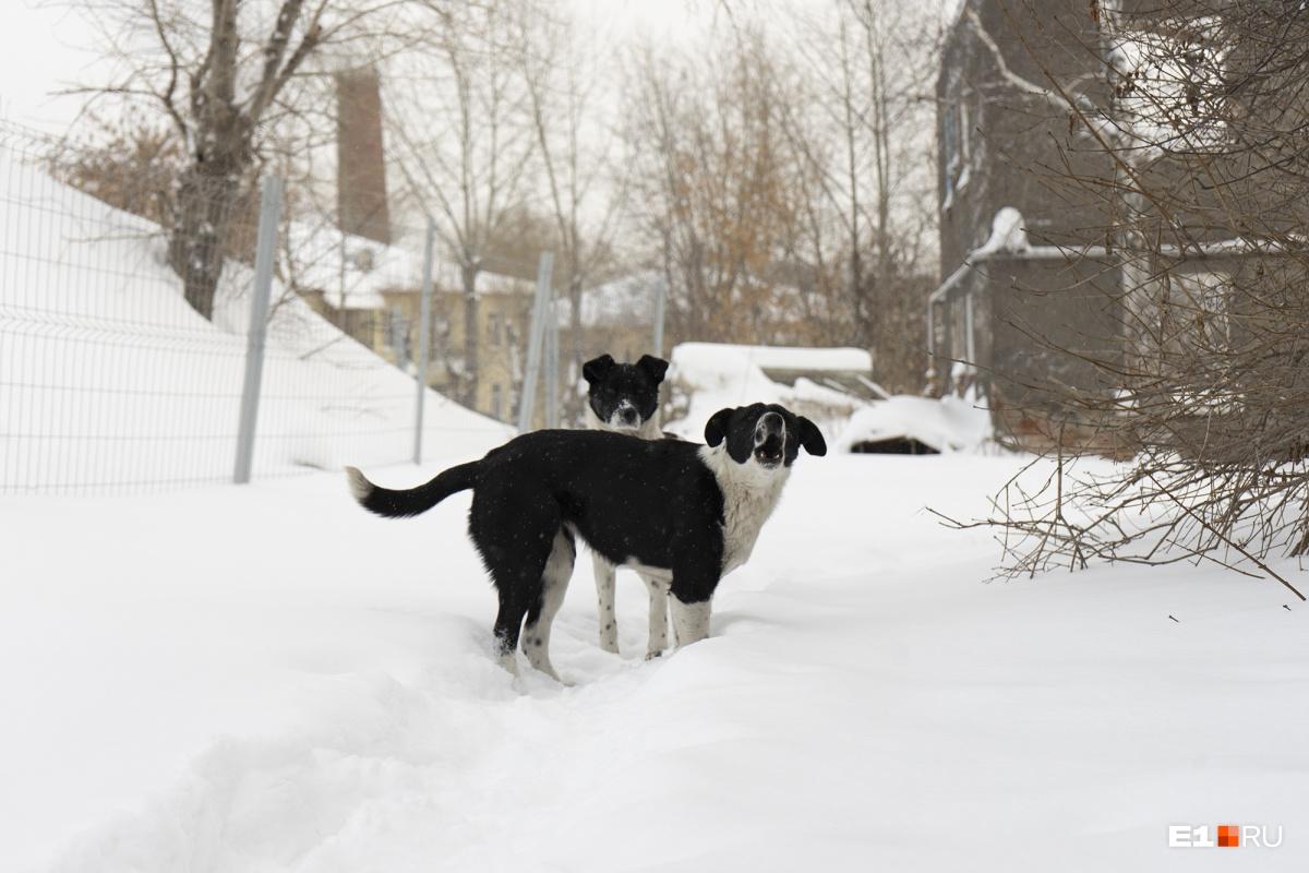 Возле дома бегают бездомные собаки, Гульфия называет их своими «новыми соседями»