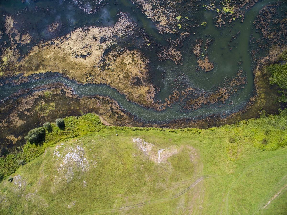 Заросший пруд напоминает космос