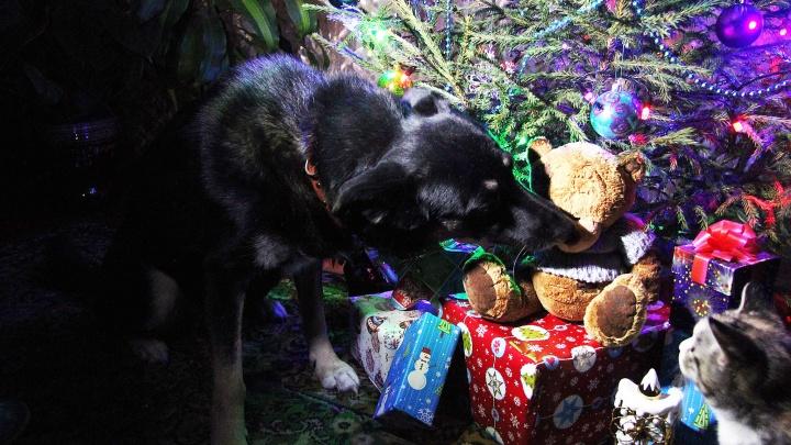 В канун Нового года новосибирцы разобрали щенков из питомников