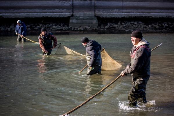 Два десятка новосибирцев приехали на шлюз, чтобы спасти рыбу