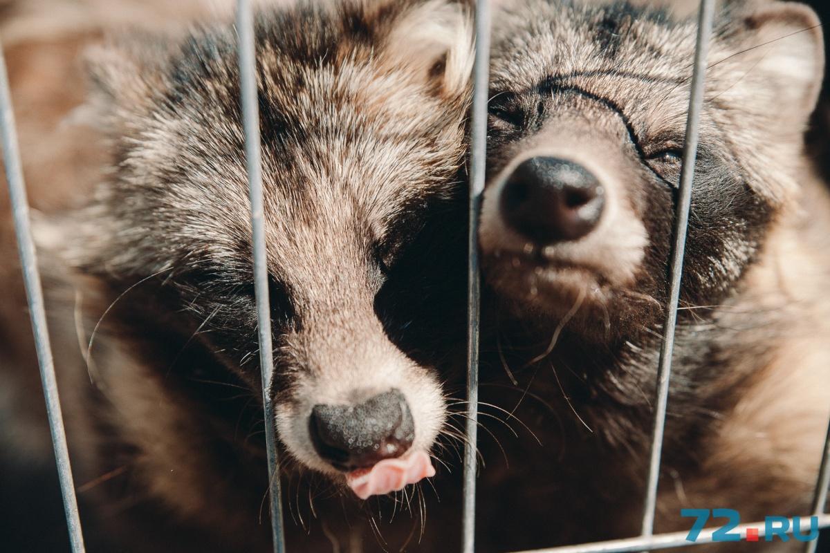 Здесь живут десятки самых разнообразных животных— от енотов, медведей до настоящей черной пантеры