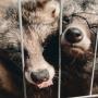 Маршрут выходного дня: где в Тюмени посмотреть на редких животных и прокатиться на собачьих упряжках