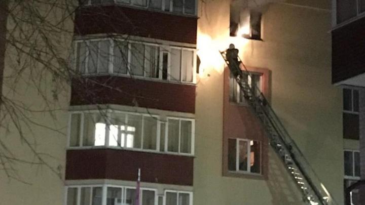 Из горящей квартиры в центре Екатеринбурга спасли собаку и кошку