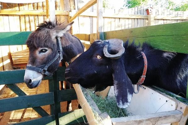 На этих выходных пообщаться с животными можно в центре Кургана и в Заозёрном