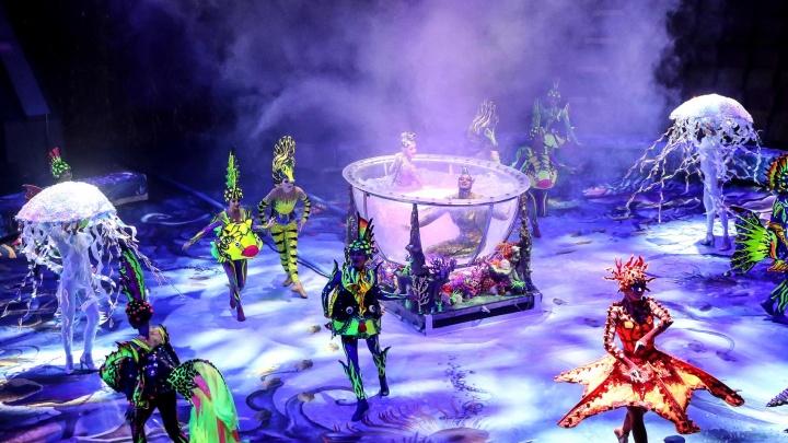 Медведи-танцоры и гимнастки в аквариуме. Показываем закулисье цирка Гии Эрадзе и яркие моменты шоу