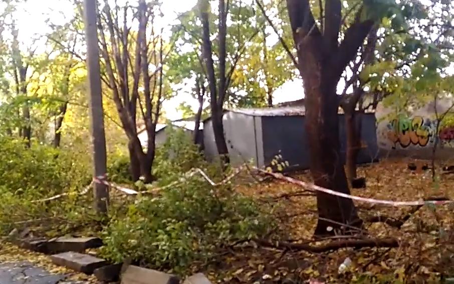 Жители дома на Турмалиновской недовольны вырубкой деревьев