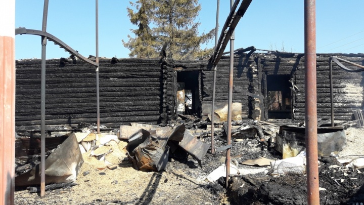 «От лошадей остался пепел»: владельцы сгоревшей под Жигулевском зоогостиницы просят помощи