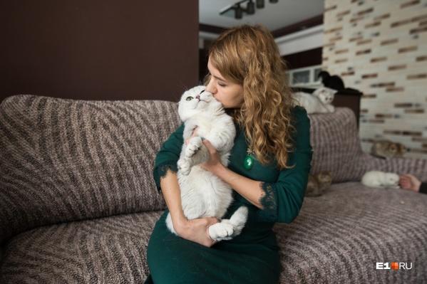 Одна из трех владелиц одного из ведущих питомников шотландских кошек в Екатеринбурге Евгения Казаева работает преподавателем в университете