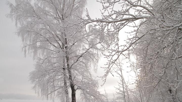 Ярославцы ждут, когда выпадет снег, а он уже давно здесь