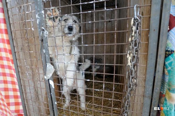 В Екатеринбурге может появиться большой приют для бездомных животных