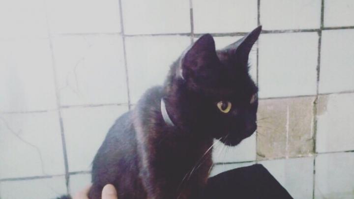 «Хотел сжечь заживо»: в Архангельске зоозащитники спасли кошку, которую могли жестоко убить