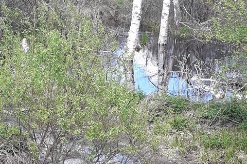 Воды реки Ушаковки оказались сильно загрязнены